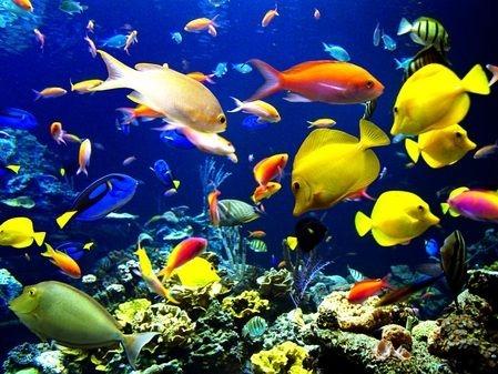 ازن در آکواریوم، استفاده از ازن در تصفیه آب آکواریوم، پرورش ماهی، ازن برای ابزیان، تاثیر ازن بر آبزیان